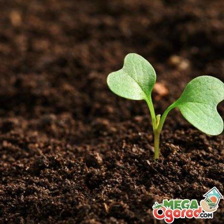 Подготовка почвы для рассады и обработка семян
