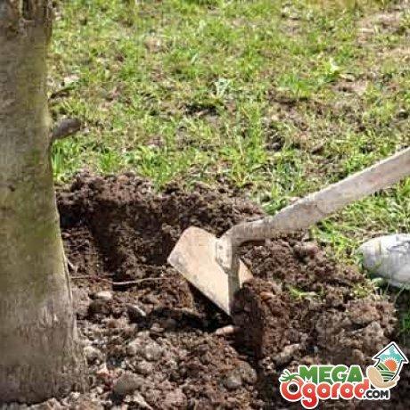 Советы по уходу за деревом