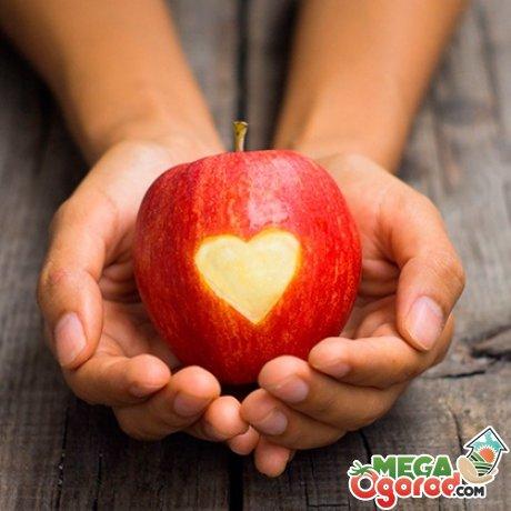 Летние сладкие сорта яблок