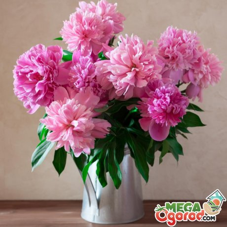 Как посадить цветок в саду по фен-шуй