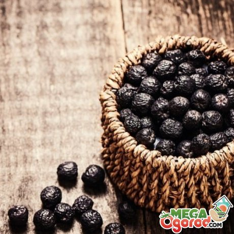 Sunberry