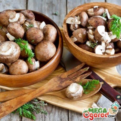 Сферы применения грибов