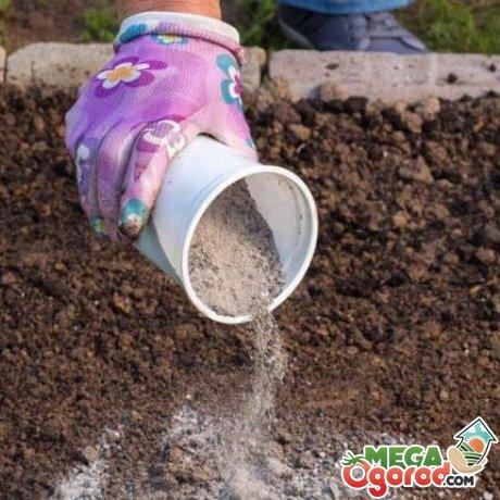Высокая кислотность почвы – как понизить?