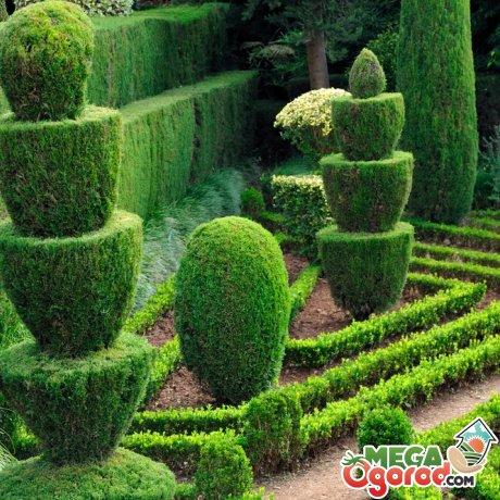Какие растения подходят для создания топиарных форм