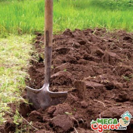 Подготовка участка и почвы