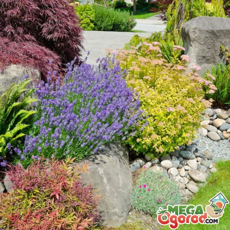 Способы использования растений в дизайне садового участка