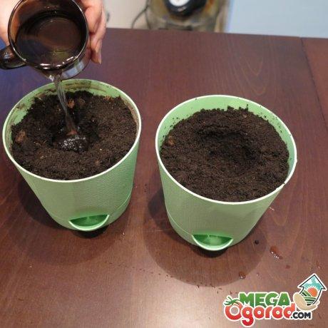Выбор почвы и горшка для комнатного деревца