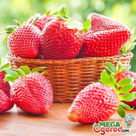 Преимущества выращивания ягоды семенами