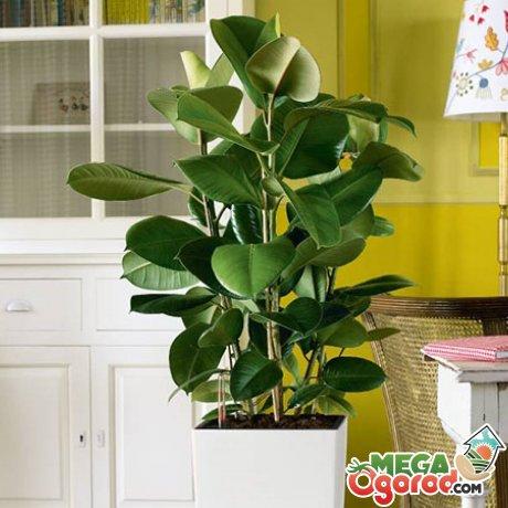 Нормы освещенности, влажности и температуры для растения