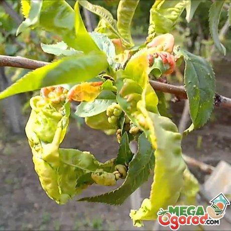 Проблемы в выращивании