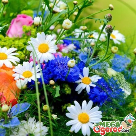 Выбираем цветы для лета