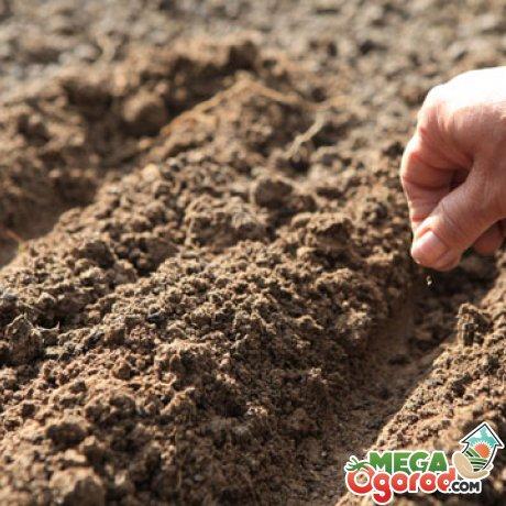 Методы размножения и выращивания