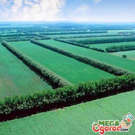 Методика защиты почвы от ветровой эрозии