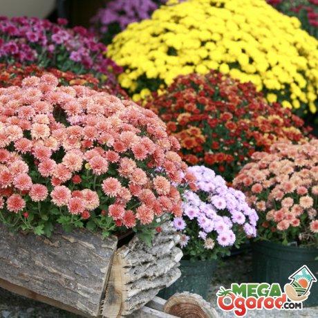 Выбираем цветы для осени