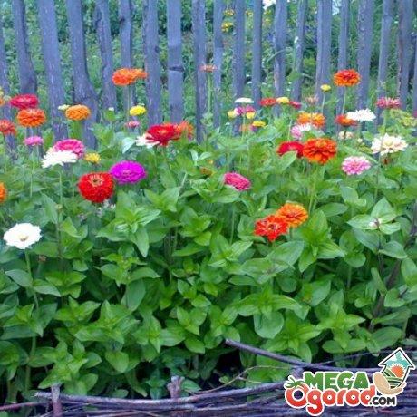 Миксбордер из цветов