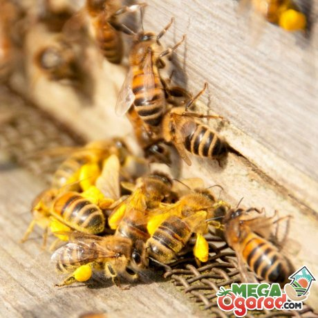 Где в доме могут поселиться осы и почему?
