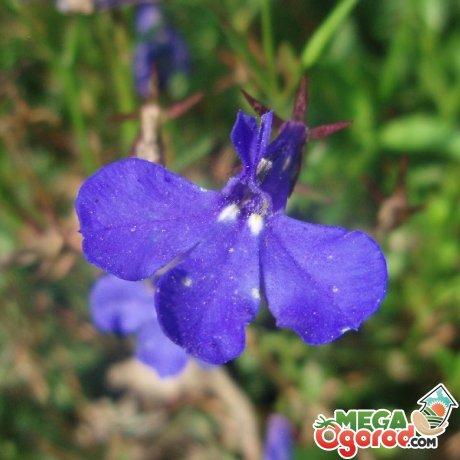 Оптимальные условия для выращивания цветка