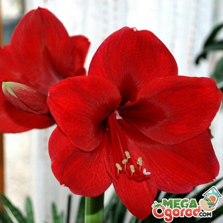 Условия выращивания цветка