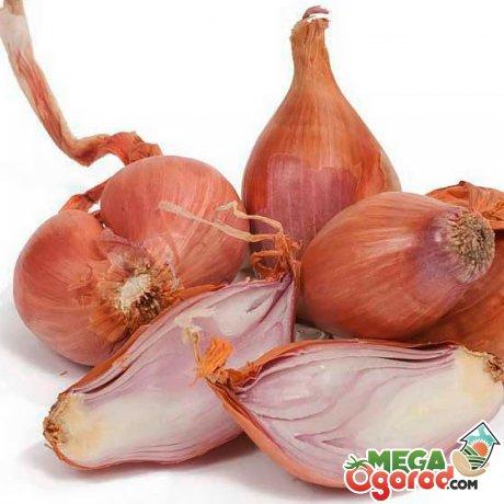 Характеристика и преимущества овоща