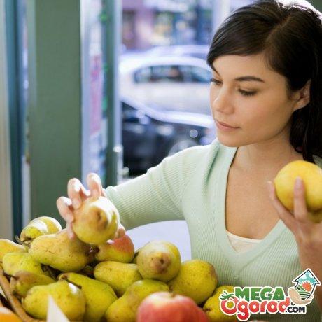 Как правильно выбирать и хранить плоды груши?
