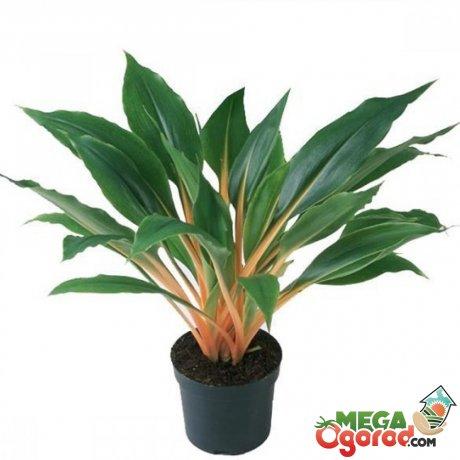 Как выглядит комнатное растение?