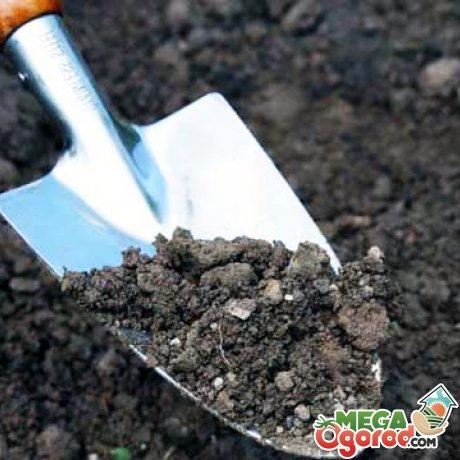 Что посадить в огороде - планировка грядок, совместимость овощей и правила севооброта