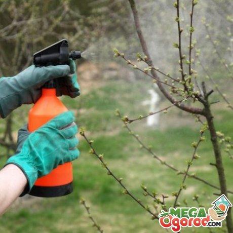 Препараты и народные средства от вредителей сада