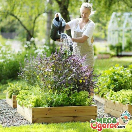 Уход за растениями – основные моменты