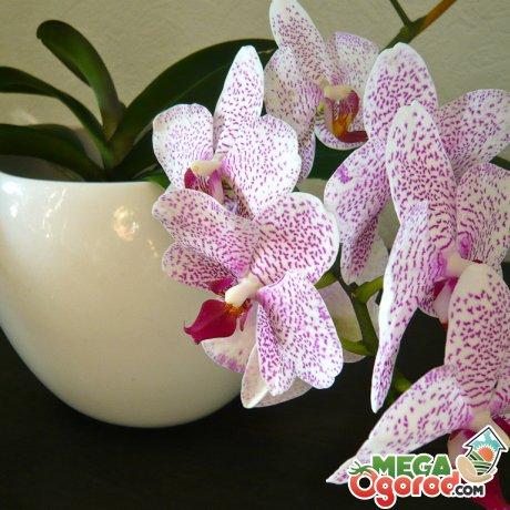 Особенности строения орхидей