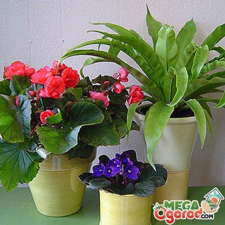 Особенности растений короткого дня