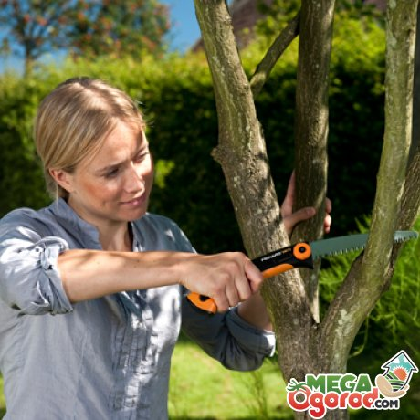 Основные правила по обрезке плодовых деревьев