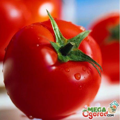 Как же обеспечить себя здоровыми томатами?