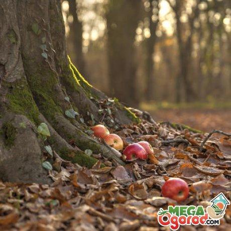 Пошаговая инструкция, как убрать корни деревьев