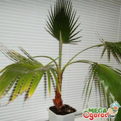 Что может навредить растению