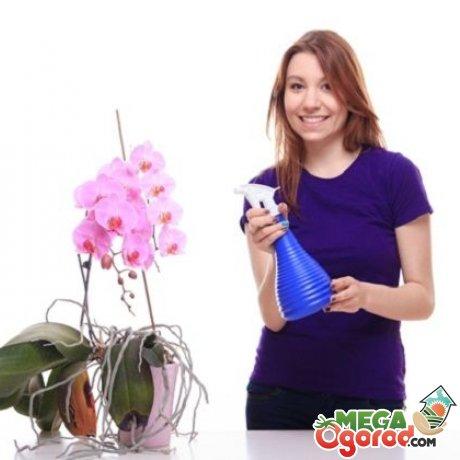 Как правильно ухаживать за орхидеями?