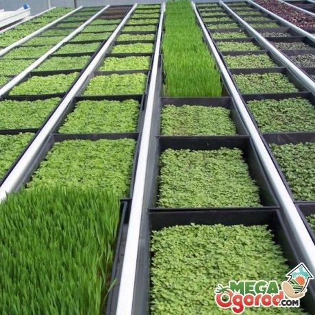 Особенности выращивания зелени на продажу