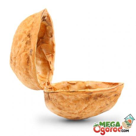 Состав и свойства скорлупы грецкого ореха