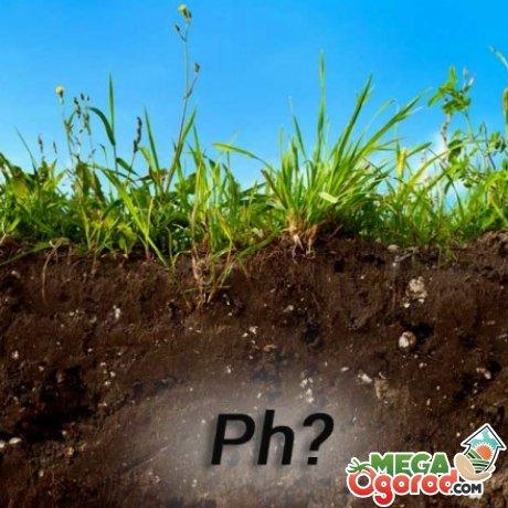 Кислотность почвы – что это такое?