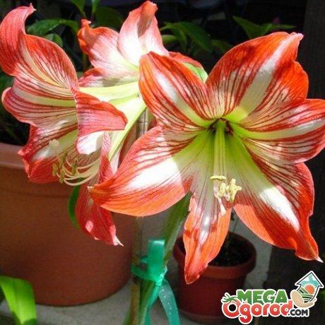 Как ухаживать за растением во время цветения