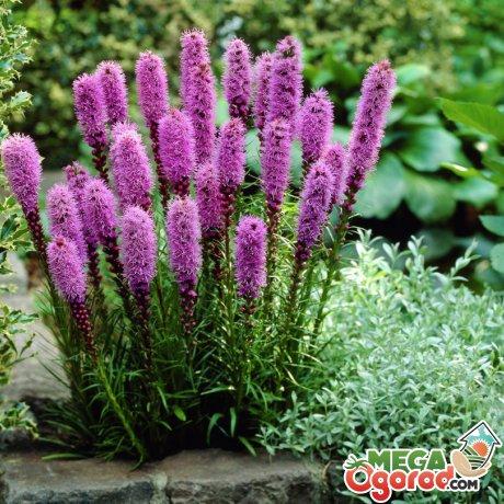 Преимущества в применении засухоустойчивых растений