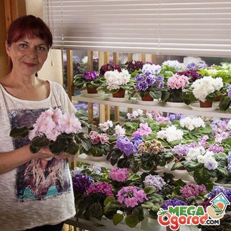 Особенности цветов, уход, выбор сорта и вида