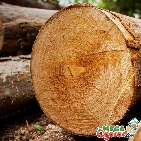 Из каких деревьев лучше делать скамейки?