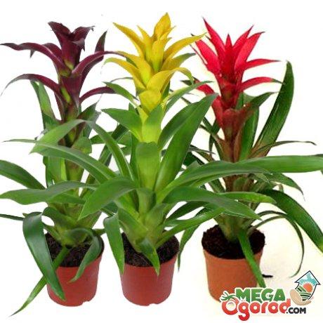 Как стимулировать цветение растения