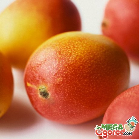 Характеристика манго как фрукта