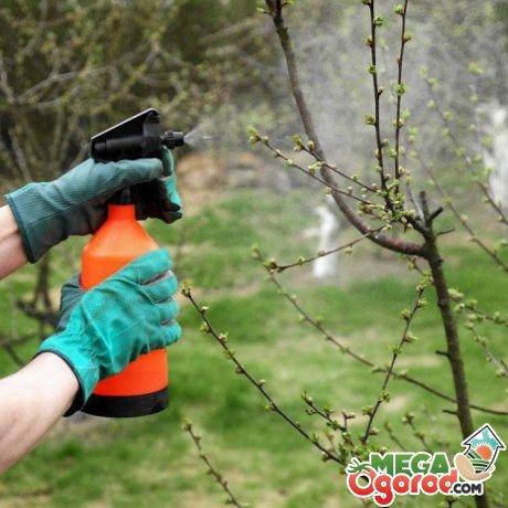 Как защитить плодовые деревья от болезней и насекомых