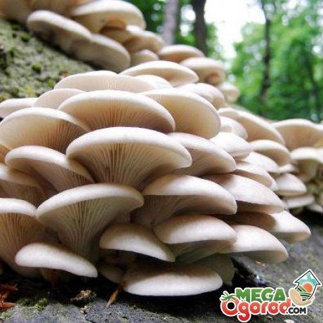 Полезные советы о выращивании грибов