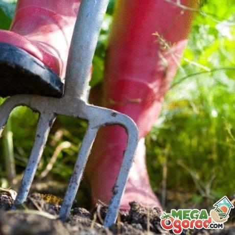 Особенности обеспечения условий роста растений