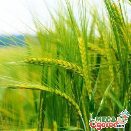 Особенности севооборота в агротехнике