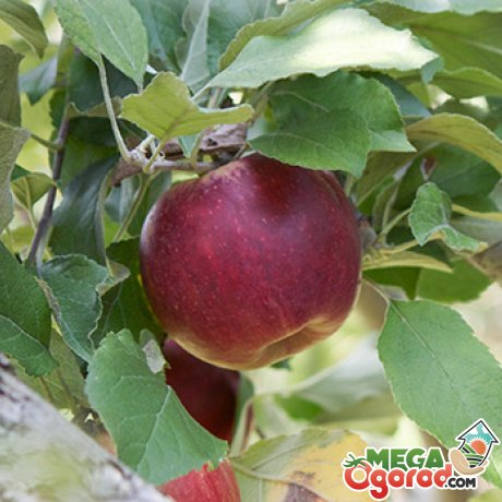 Условия для выращивания