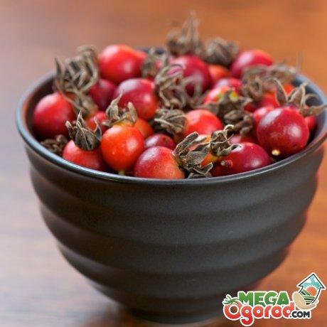 Целебные свойства ягод шиповника
